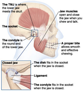 tmj anatomy massage therapy treatment